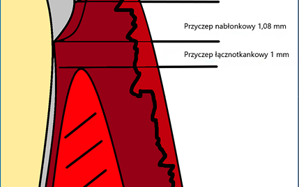 Fot. 1.Szerokość biologiczna – schemat